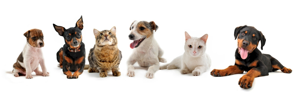 For your pet`s safety, we maintain your pet`s records.